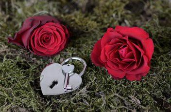 rose-2321513_960_720
